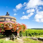02-vineyards-of-cote-de-beaune